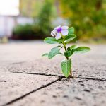 small purple flower growing from concrete